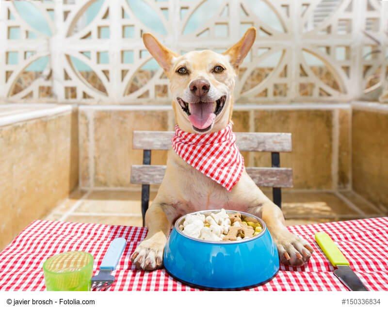 hungriger kleiner hund