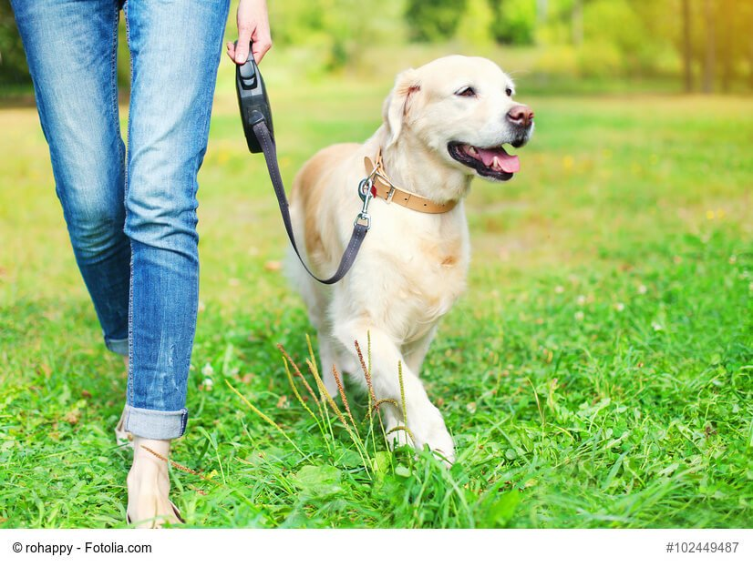 Hond Léngt