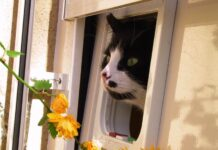 Cat flap with cat