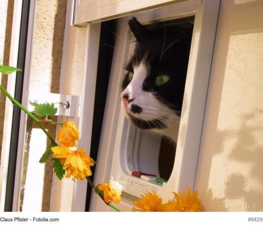 Katzenklappe mit Katze