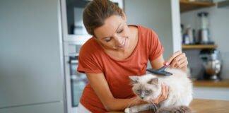 Katzen haarpflege