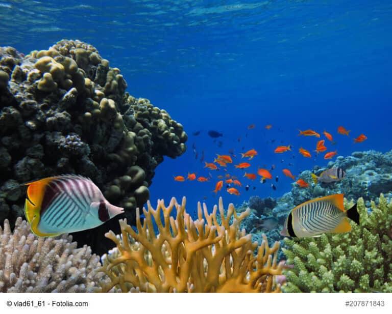 Karang laut Sango